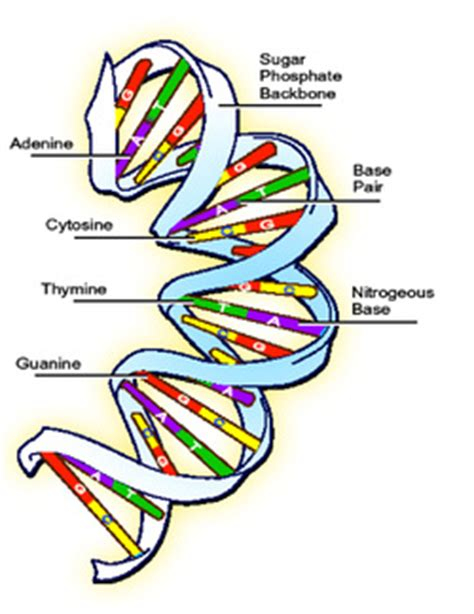Argumentative essay on human genetic engineering project